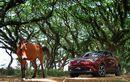 Toyota Berencana Menurunkan Harga Mobil Hybridnya Lewat Jalan Ini
