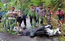 Masih Pakai Helm dan Jas Hujan, Karwayati di Pekalongan Tewas Saat Menyingkirkan Bambu di Tengah Jalan