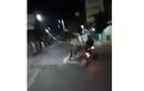 Biar Tahu Rasa! Pemotor Pecicilan Berdiri di Atas Motor Sambil Lepas Tangan, Langsung Ditendang Pemotor Lain Sampai Mental