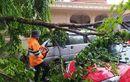 Toyota Agya dan Daihatsu Espass Ketutup Ranting dan Daun, Pohon Tumbang Menjulur