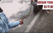Kejam Banget, Video Seorang Youtuber Bikin Konten Menyiksa Hewan Dengan Menyeret Biawak Dengan Sepeda Motor