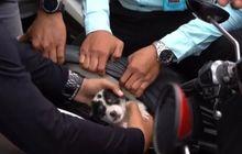 Geger Polisi Temukan Dua Anak Anjing Terjebak di Dalam Jok Motor Sitaan Balap Liar, Begini Kronologinya