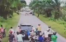 Bukan Polisi, Video Rombongan Pemudik Lokal Terhalau Hewan Ini