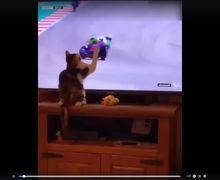Pembalap Yang Dijatuhkan Kucing di MotoGP Amerika, Ngajak Ketemuan