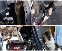 3 Binatang yang Sering Bersarang di Yamaha NMAX, Ular Cobra Paling Mematikan Mendadak Muncul dari Balik Lampu Depan