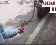 Konten Murahan, YouTuber Tega Siksa Biawak Diseret Pakai Motor, Pelaku Termehek-mehek Dijemput Polisi