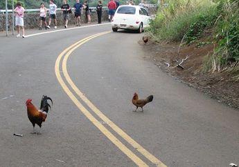 Ada Binatang Nyebrang Jalan Tiba-Tiba, Ditabrak Atau Menghindar?