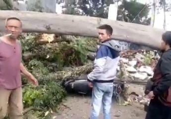 Video Detik-detik Pohon Besar Tumbang Hancurkan Pangkalan Ojek, 1 Orang Meninggal dan 2 Kritis