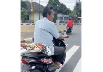 Pemotor di Lampu Merah Kaget, Pria Ini Nekat Bonceng Ayam Jago di Jok Belakang Tanpa Diikat