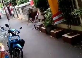 Video Warga Berhamburan Sapi Kurban Lepas Masuk Gang Motor Diseruduk