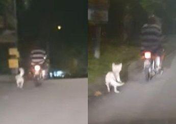 Tega Banget, Video Pemotor Ikat Anjing di Belakang Motor Nyaris Terseret, Dikecam Netizen