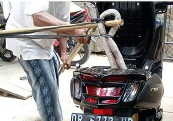 #NgoprekSantuy, Motor Rentan Jadi Sarang Tikus atau Ular Cobra Saat Lama Gak Dipakai, Begini Cara Mengatasinya