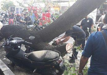 Pemilik Cuma Bisa Pasrah, Video Yamaha NMAX Baru dan Dua Motor Lainnya Remuk Tertimpa Pohon Besar di Bali
