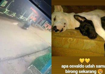Netizen Langsung Murka, Video Seekor Anjing Tewas Setelah Diikat dan Diseret Pakai Motor Oleh Orang Tidak Dikenal