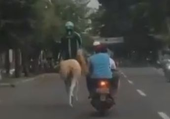 Viiral! Bak Pangeran Dalam Film, Driver Ojek Online Tunggangi Kuda, Warganet: Motor Ketarik Debt Collector