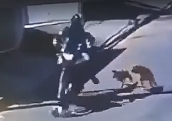 Kocak Mau Tertawa Takut Dosa Pemotor Dikejar Tiga Anjing Lepas Kontrol Jatuh dan Kaki Keseleo Kesakitan