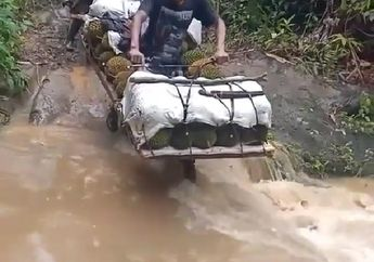 Dijamin Baper, Demi Anak Istri Seorang Suami Rela Bertaruh Nyawa Sebrangi Sungai Pakai Motor, Puluhan Durian Tak Ketinggalan