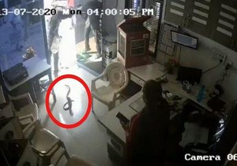 Dendam Ditolak Isi Bensin Pakai Botol, Pria Ini Lepas Ular Kobra ke Kantor SPBU, Petugasnya Kok Cuek AJa Sih?