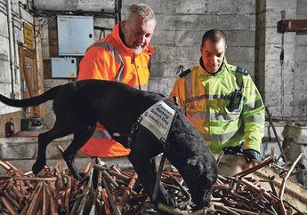 Keren, Di Inggris Anjing Pelacak Bakal Dilatih Untuk Bantu Polisi Cari Motor Curian