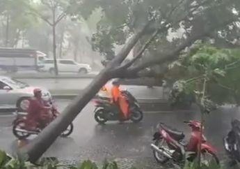 Bikin Merinding, Viral Nyawa Pemotor Hampir Hilang Tertimpa Pohon