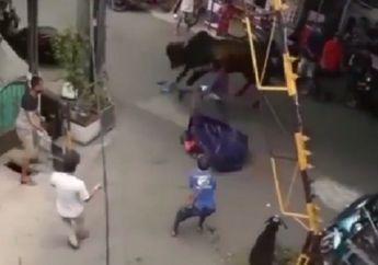 Tanjung Priok Geger, Sapi Kurban Terlepas Seret Seorang Warga dan Terjang Motor