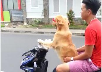 Gokil.. Cuma di Indonesia Anjing Bisa Bawa Motor dan Boncengin Pemiliknya