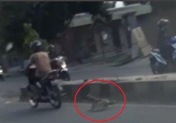 Sadis Banget, Video Anjing Mungil Diseret Motor di Jalan Raya Bandar Lampung