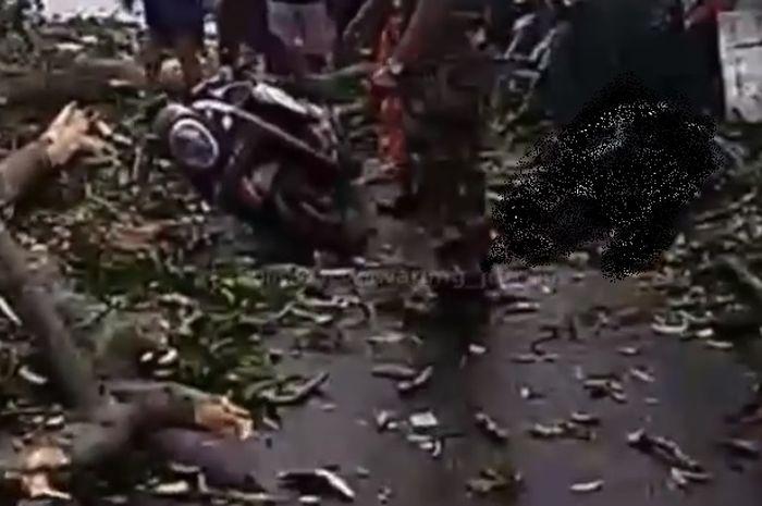 Pengendara Honda Scoopy tewas tertimpa pohon tumbang di Bali.