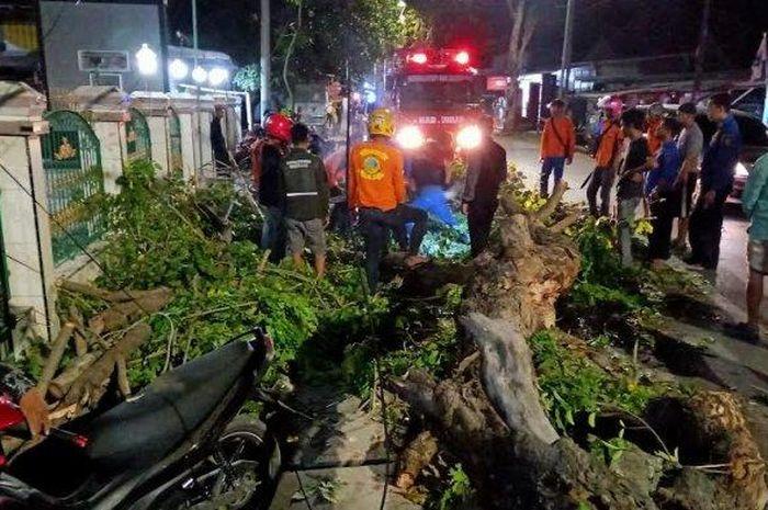 Sebuah pohon tumbang menimpa 2 motor yang sedang parkir