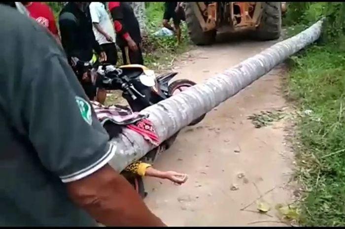 Seorang pemotor wanita tewas tertimpa pohon kelapa setinggi 50 meter di Polewali Mandar, Sulawesi Barat.