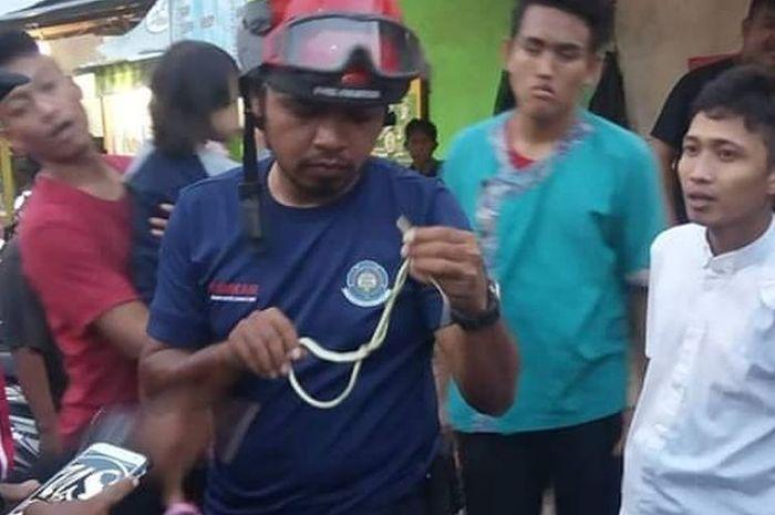 Petugas pemadam kebakaran mengevakuasi seekor ular tambang di motor milik warga