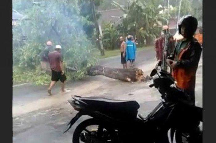 Pohon asem di Bangunjiwo Kasihan Bantul tumbang saat hujan deras