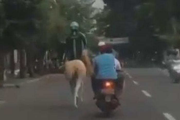 driver ojol menunggangi kuda