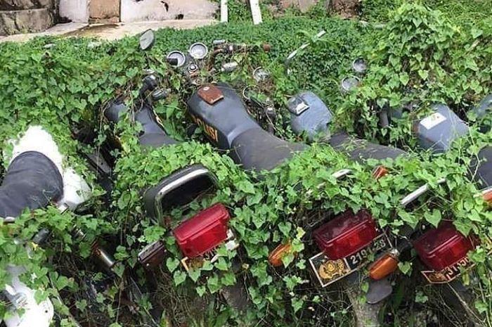 Harta karun, Yamaha RX-King dinas polisi terlantar sampai diselimuti tanaman