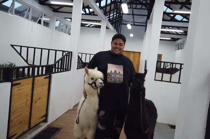 Ivan Gunawan mau pelihara Alpaca, ternyata harganya selangit !  Setara dengan harga Kawasaki Ninja ZX-250R 4 silinder