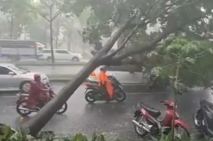Pemotor nyaris tertimpa pohon tumbang