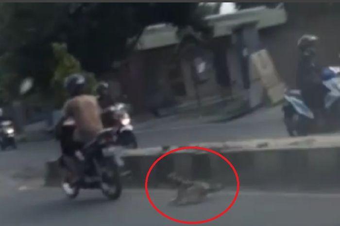 Anjing diseret ke jalan raya